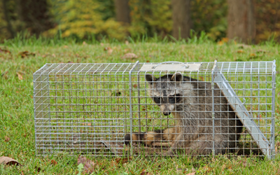 Are You Making These 5 Mistakes While Hiring Wildlife Removal Services?