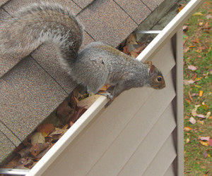 QUIRRELS REMOVAL SERVICES